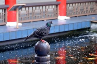 A bird resting near the koi pond