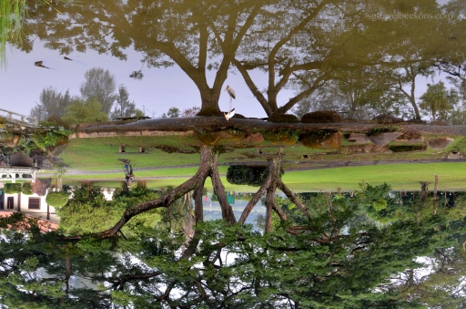 Green reflections in the Japanese Garden